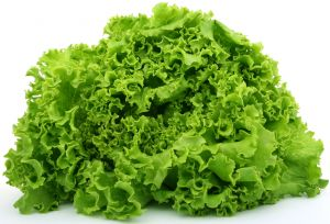 greenlettuce